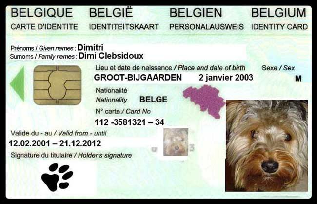 carte chien