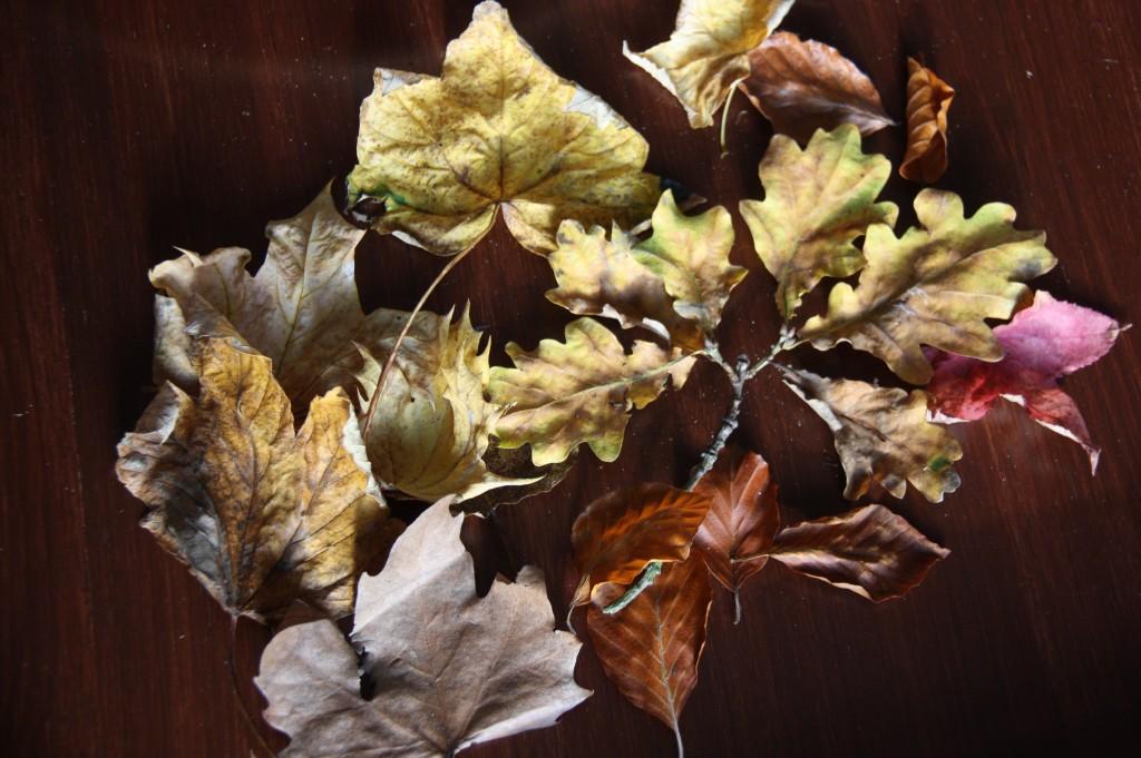 feuilles 1